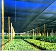 ALNET AGRICULTURAL NETTING